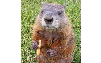 158 - groundhog