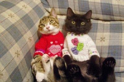 158 - valentine - cats