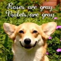 158 - valentine - dog