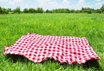 picnic mosquito repellent